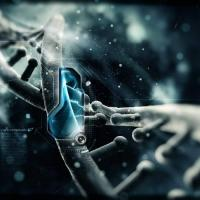 CHECHEN-NOAHCHO DNA PROJECT